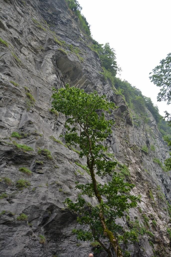 """""""Da wachsen ja Bäume."""", höre ich meine Tochter sagen als sie einen Baum am Felshang entdeckt."""