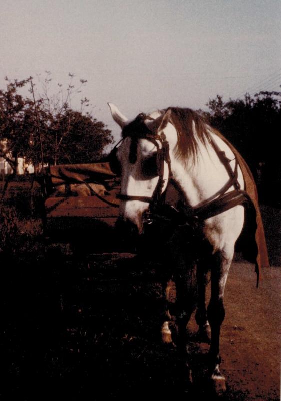 Die Pferde waren für die Bauern wichtig. Sie hielten sie gut, denn sie halfen bei der Arbeit.